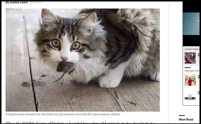 「今すぐネコを皆殺しにしろ」野生生物保護VSネコ保護でアメリカ大論争! 結論は?の画像1