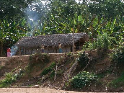「世界一健康な心臓」をもつアマゾンのチマネ族の生活習慣 糖質に依存しない食生活が原因?の画像1