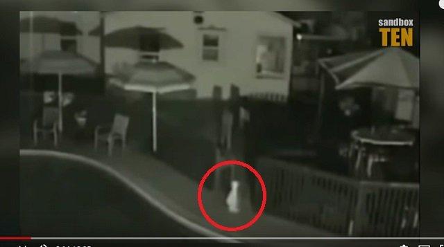 首から脚が生えた「ペラペラに薄い宇宙人」4体が激撮される! 身長1.2mで真っ白、伝説のUMA「ナイトクローラー」か?の画像1