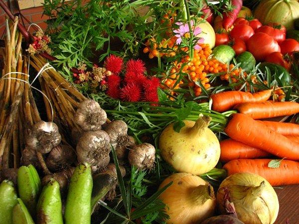 organicfood1.JPG