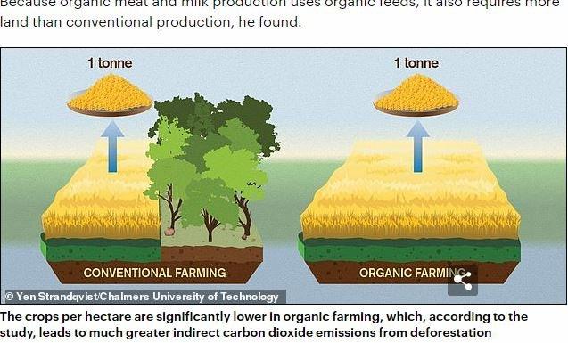 organicfood2.JPG