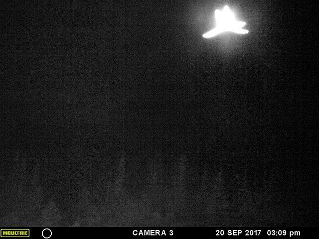 【衝撃】「ヒトデ型の巨大天使」がカナダ上空に出現、激撮される! 強烈に光り輝く謎の物体、触手もクッキリ、UFOか?の画像1