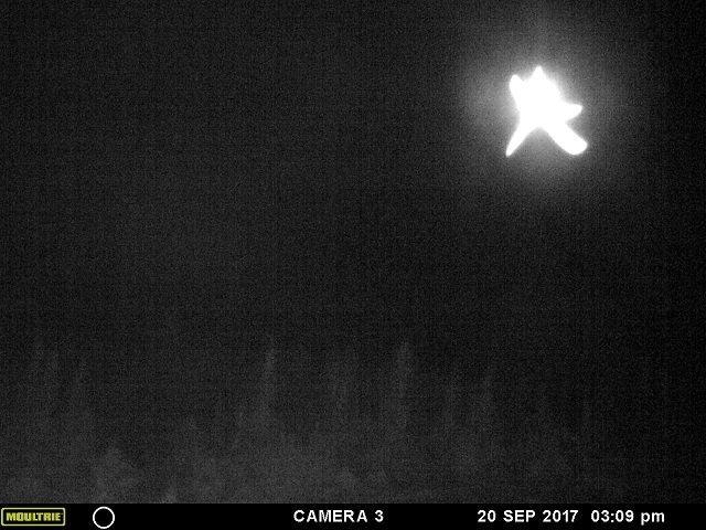 【衝撃】「ヒトデ型の巨大天使」がカナダ上空に出現、激撮される! 強烈に光り輝く謎の物体、触手もクッキリ、UFOか?の画像2