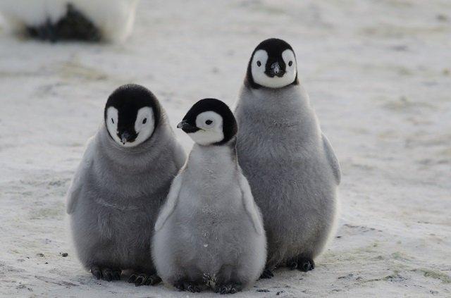 【ガチ】米政府が「氷漬けのペンギンの松果体」を爆買い、ウィキリークスが暴露! 目的は一切不明、理学博士がコメント「超能力研究の可能性」の画像1