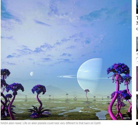 purplecolouredlife2.JPG