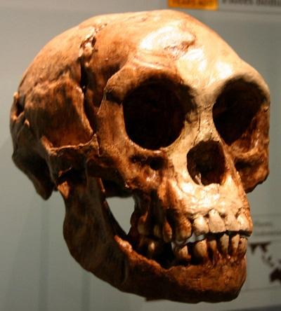 ホビット? ダウン症? 身長1m、高度な知能を持った1万7千年前の人骨の謎!の画像1