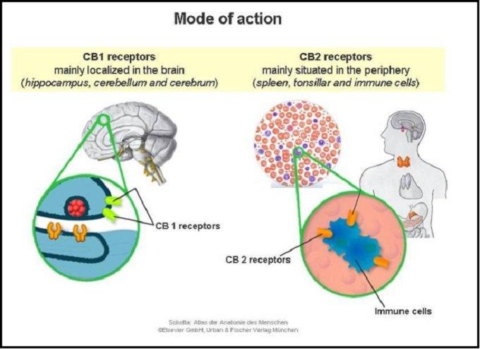 receptors1107.jpg