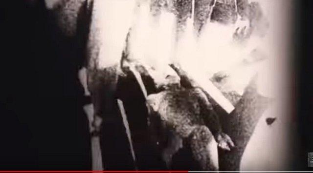 【新事実】「ロズウェル宇宙人」がエリア51に搬送された時の映像が流出、本物の可能性! 警察の新証言も「1.5メートルの生命体がいた」の画像2