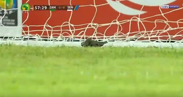 サッカー・セネガル代表がピッチ上で黒魔術「ジュジュ」を使用する衝撃映像! W杯で日本代表も呪われる可能性大!の画像1