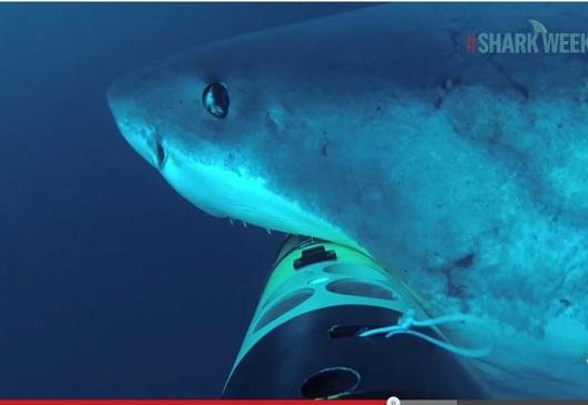 sharkcam2.JPG