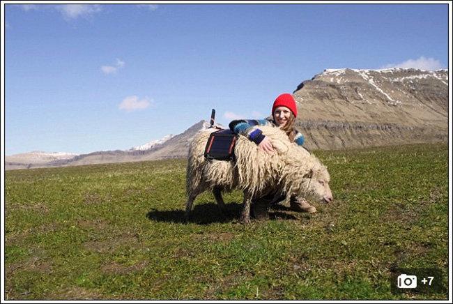 sheepview6.jpg