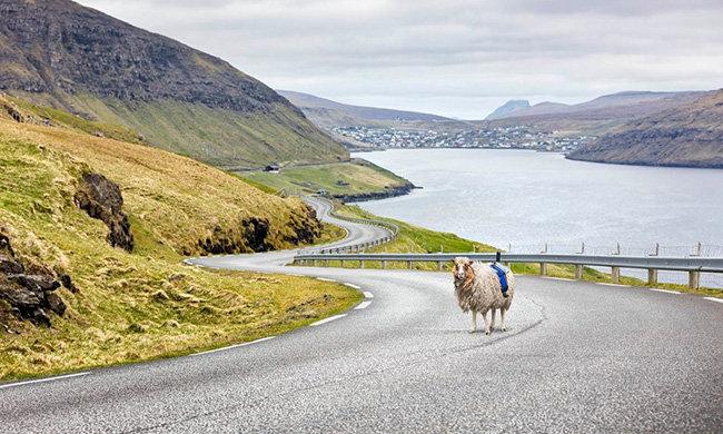 sheepview8.jpg