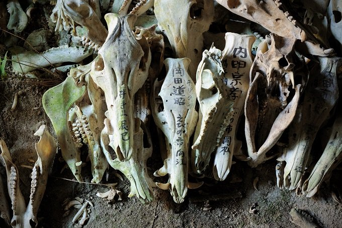 【閲覧注意・九州】2万体の頭蓋骨を祀る聖地「シシ権現」!  骨には鮮血が滴り、肉片も…現地取材!の画像1