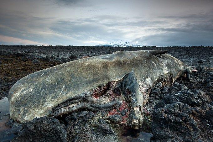 【激怒】「クジラの座礁は地震と関係なし」東海大の発表は間違っている! これでいいのか、徹底反論!の画像1