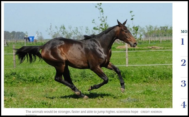 2年後に遺伝子編集された最強の馬「スーパーホース」誕生へ! 爆速で走るだけでなく…競馬界も激変か!?の画像1