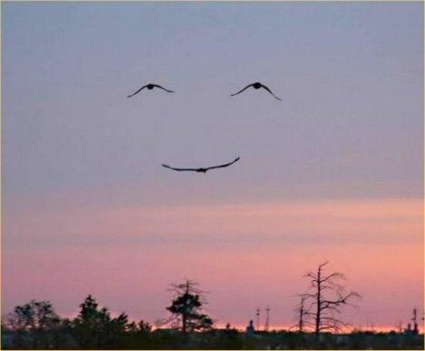 three-bird-smiley-face.jpg.jpg