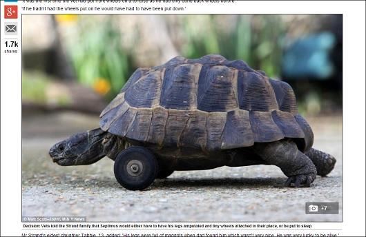 tortoise_3.jpg