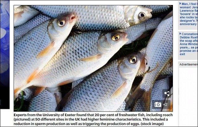 【悲報】避妊ピルで世界中の魚がトランスジェンダー化! 英オス魚の20%が卵子を保有、日本や米国もヤバイ事態にの画像2