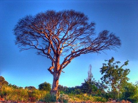 treetest2.JPG