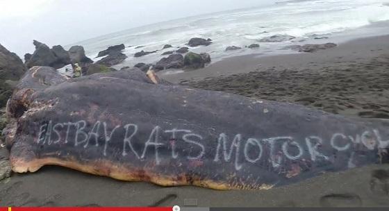 whalecarcass2.JPG