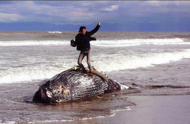 whalecontest1.jpg