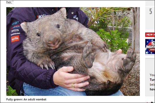 wombat_4.jpg
