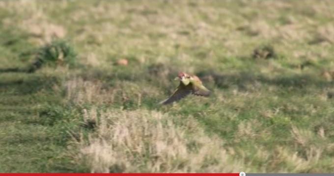 woodpecker_3.jpg