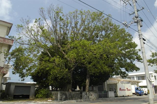 「命落とすよ」取材中に目から血を流した老婆が警告! 沖縄「ユタの祠跡」にまつわるヤバイ過去とは!?の画像1
