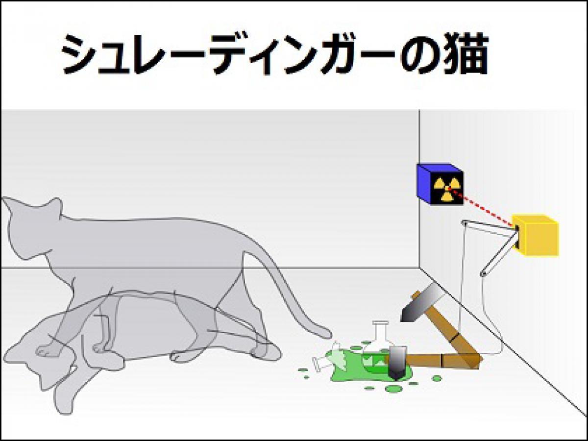 猫 シュレー ディンガー の