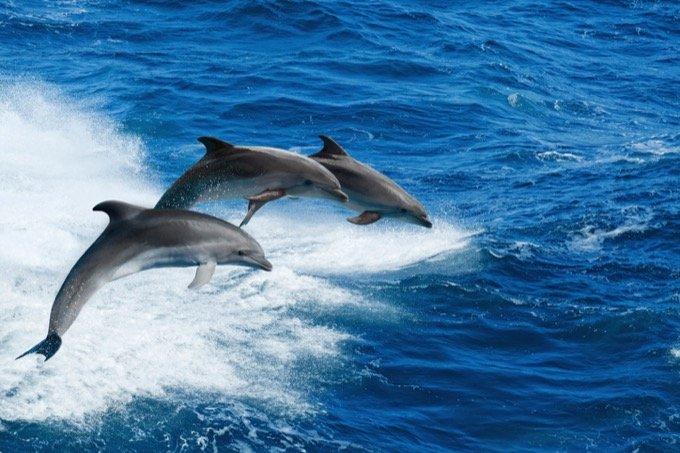 イルカは互いに「名前」で呼び合い会話していることが判明! 同盟を結んで戦いも… 異様に賢い実態に戦慄(最新研究)の画像1