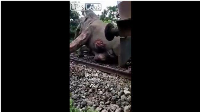 【閲覧注意】列車とゾウが衝突するとこうなる! ボロボロの瀕死状態で懸命に線路から立ち退こうとする姿に涙…!!!の画像2