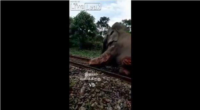 【閲覧注意】列車とゾウが衝突するとこうなる! ボロボロの瀕死状態で懸命に線路から立ち退こうとする姿に涙…!!!の画像3