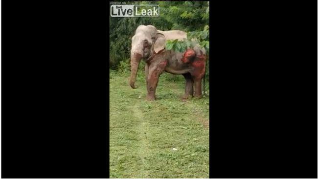 【閲覧注意】列車とゾウが衝突するとこうなる! ボロボロの瀕死状態で懸命に線路から立ち退こうとする姿に涙…!!!の画像5