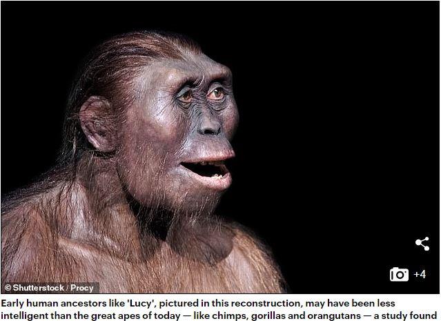 人類 の 祖先